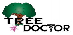bad-logo-design-tree-doctor